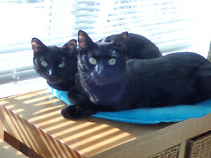 2 sleek mini panthers need forever home