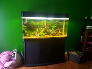 90+ gallon bowini  aquarium with everything