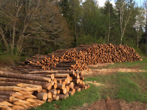 Cedar fence posts and stakes