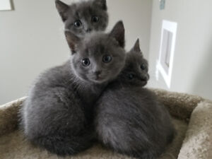 Kitten for rehoming- shots included