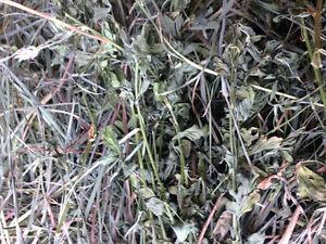 Alfalfa Brome Timothy mix hay