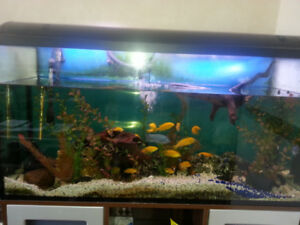 fish and tank complete for sell