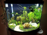 fish tank and plants and fish for sale