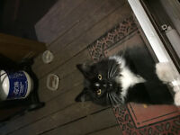 found cat on george st , sydney