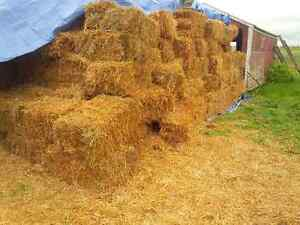 MIXED HAY/STRAW BALES FOR SALE