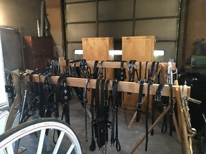 Draft Horse Show Harness