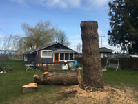 Affordable arborist, tree removal and tree care services