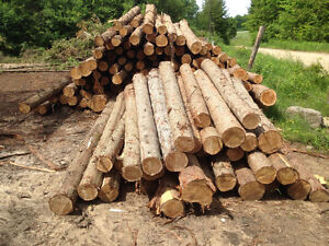 Small ceder logs and fence post