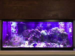 Complete 75gal saltwater reef tank for sale
