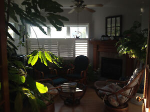 Beautiful house plants - Moving sale Kingston Kingston Area image 1