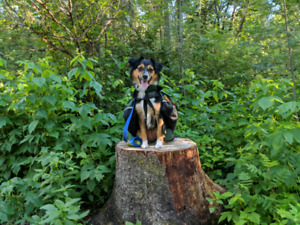 Dog Walking Service in Spruce Grove ($20 off first booking!)