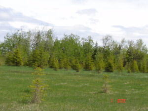 5 ACRE LOT CLOSE TO EAST GATE OF THE BIRDS HILL PROV. PARK