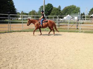 Cours d'équitation,entrainement,prog.personnalisé