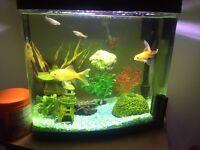 Aqua zone 28 fish tank