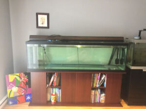 aquarium 125 gallon