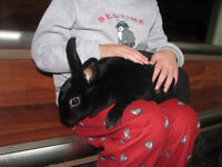 2 beautiful female rabbits - Delivery Saturday!