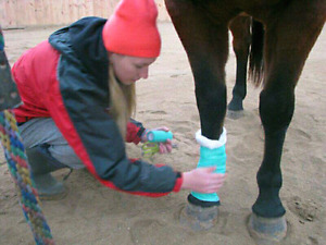 Equine First Aid Courses all Over Ontario.