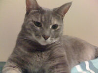 Lovely cat needs a lovely home