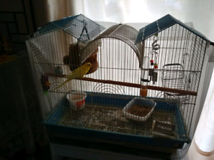 2 budgies and cage & accessories