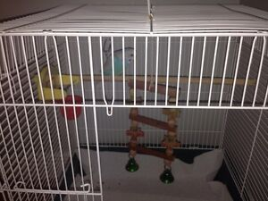budgie for sale and Cage for $20.00 Kitchener / Waterloo Kitchener Area image 1