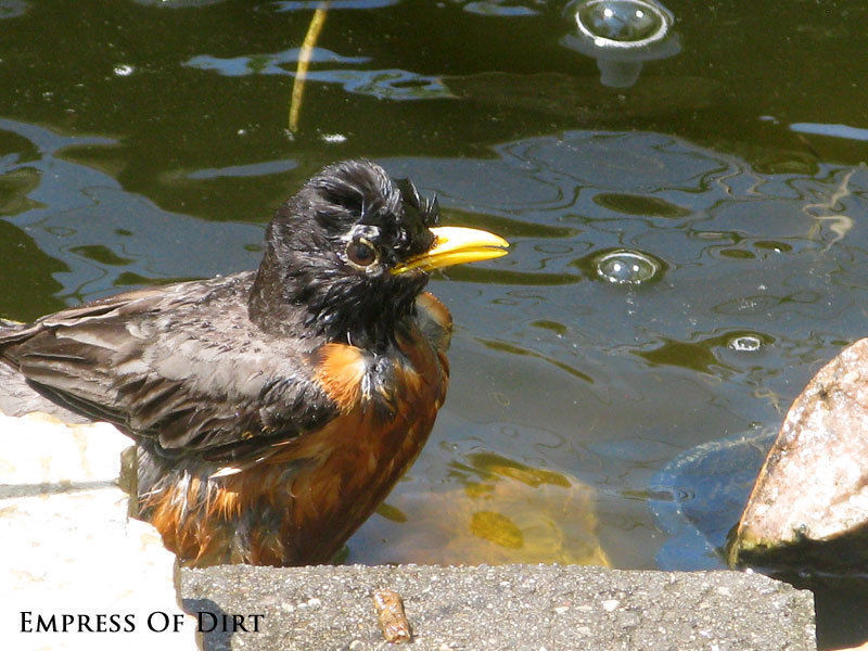 Ponds provide essential habitat for birds, bees, insects, and more