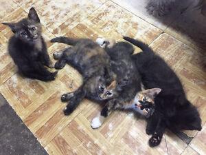 4 little kittens!