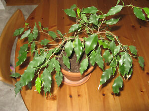 House Plants, starting from $10 Kitchener / Waterloo Kitchener Area image 5