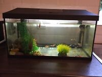 Fish Tank - 60 Litres with heater/filter/light/thermometer and fish
