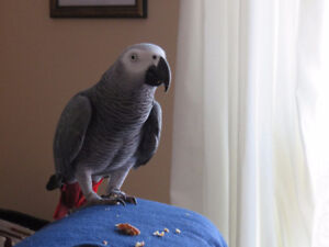 Barrie pet-sitting/ boarding - specializing in birds, small pets