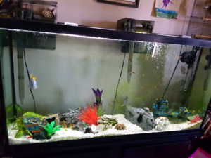 Looking for a Large cichlid