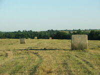 QUALITY Hay for sale HEAVY BALES