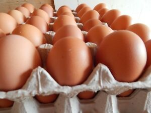 Fresh Farm Eggs for Sale