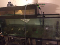 135 gallon BARE aquarium