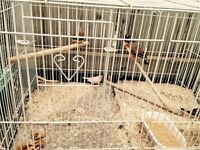 6 zebra finch with cage