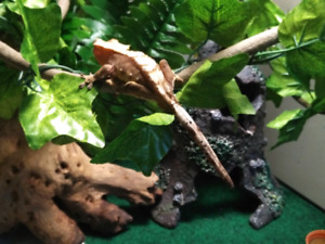 Reptile Sitting: South Courtice