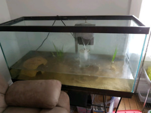5 Axolotls and 90 gallon tank with stand