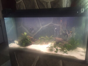 33 Gallon fresh water fish tank-Complete