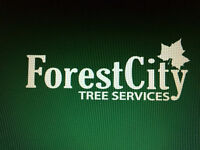 Forest City Tree Services - 20% Off Fall Sale