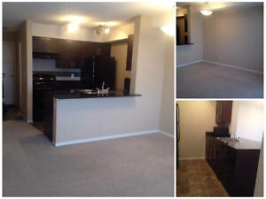 2bed 1 bath brand new condo space for rent