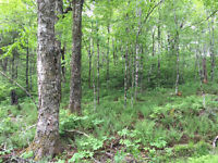Lot 1 Tramble Property, North Ogden, Guysborough County NS
