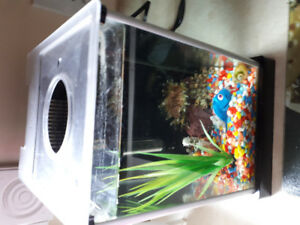 Fish needs new home