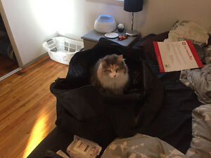 Female cat looking for new home !