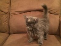 Three Female Kittens to give away