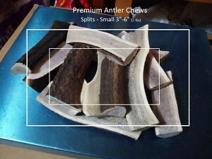Fresh antler dog chews (Best price, best quality) Kitchener / Waterloo Kitchener Area image 4