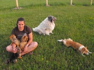 HI DOG SITTER FOR $ 20.00 A DAY Peterborough Peterborough Area image 8