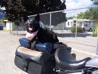Service and Medical Assistance Dog Training