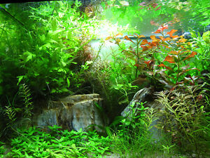 Live aquarium plants for sale - best prices in Ottawa