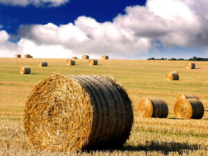 Wanted Hay 4x5 round bales