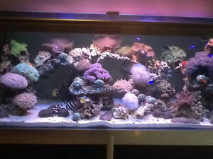 Large custom built salt water fish tank and stand