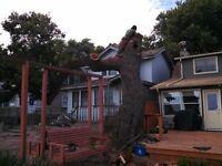 Tree Service, Stump Removal Call 519-300-8196
